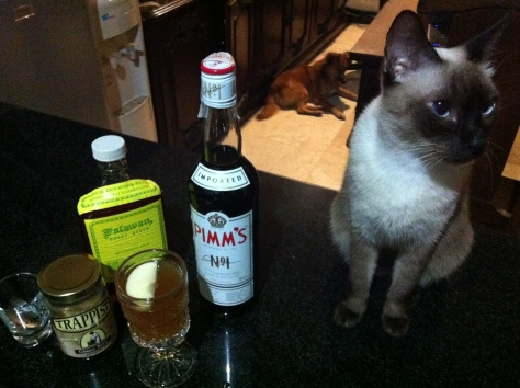 Drinking with Mama Cat