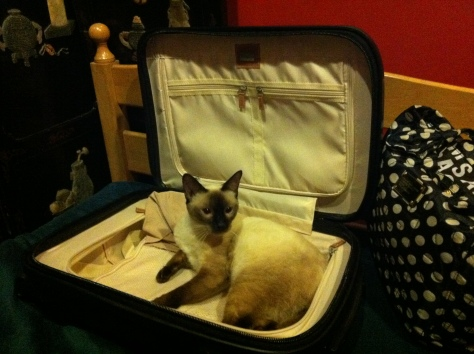 The Bear Cat in my luggage