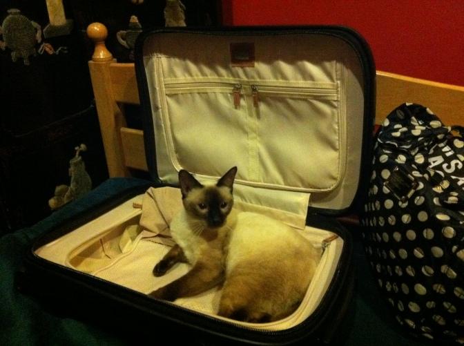 Dilemmas of the Pet Loving Traveller